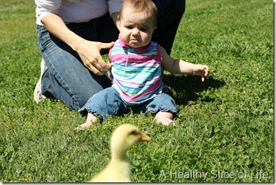 Hailey scared of baby duck
