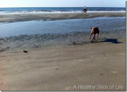 Hilton Head Island 2012- Koda on beach