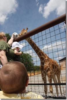 giraffe lazy 5 ranch mooresville nc