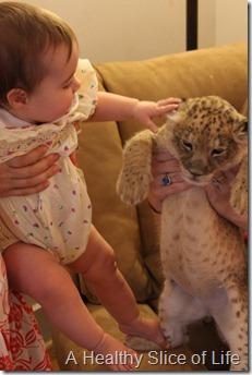 Friday randoms- Zootastic- Hailey and lion cub
