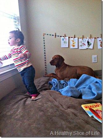 16 months old- dog bff