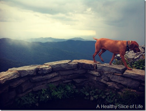 go together- vizsla and hiking