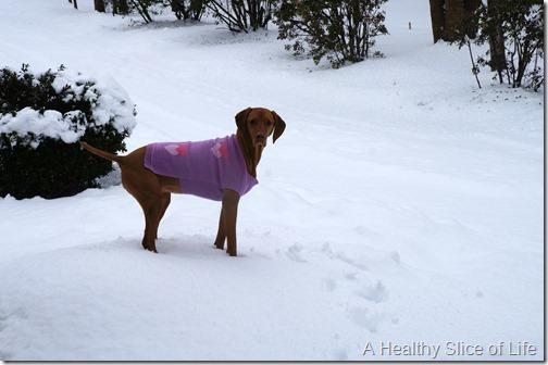 charlotte snow storm February 2014- vizsla sweater
