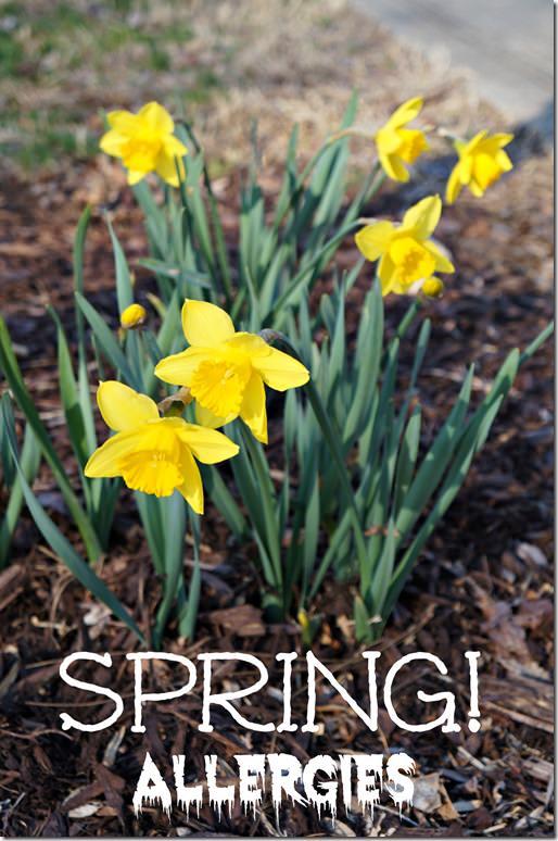 spring allergies, alfalfa