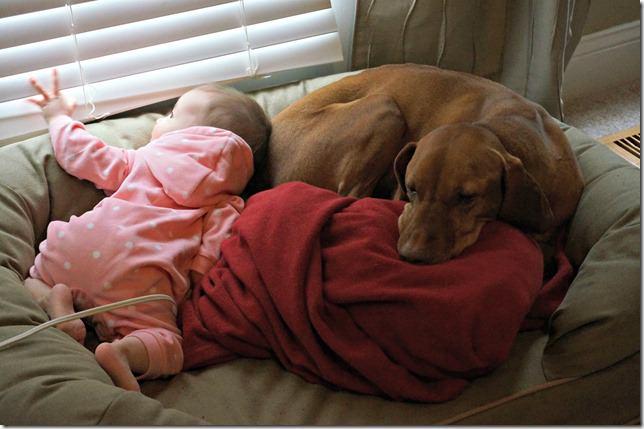 8 months old- dog lover
