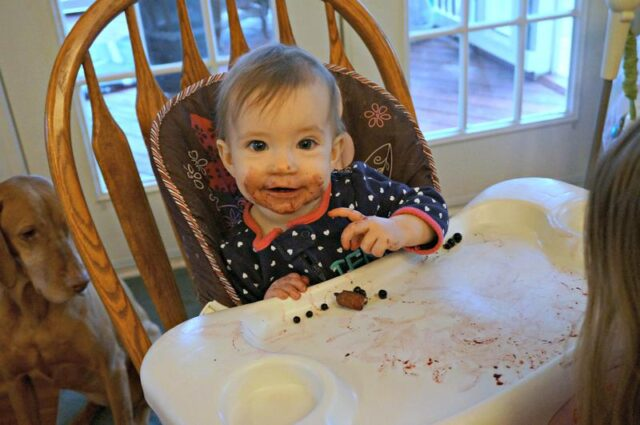 nine month old blueberry lover