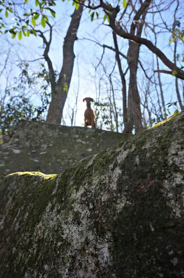 stone mountain state park north carolina- vizsla