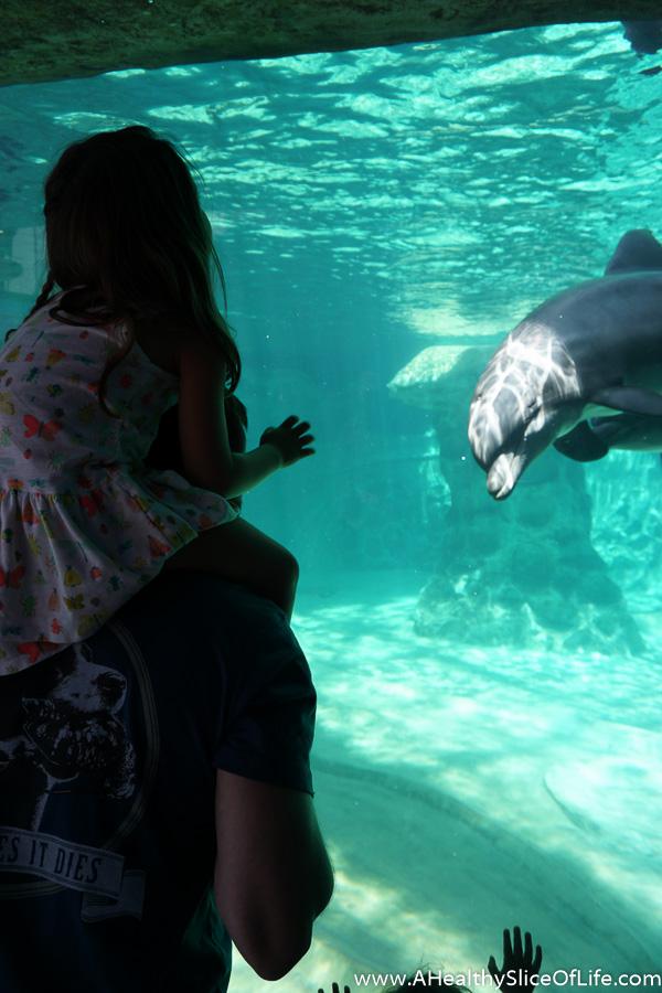 georgia aquarium-13