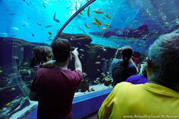 georgia aquarium-14