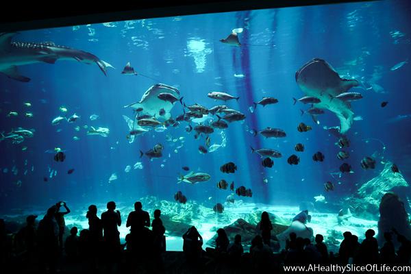 things to do at the georgia aquarium