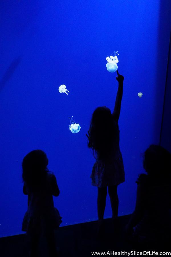 5 things to do at the georgia aquarium