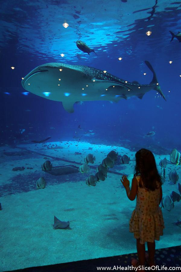 georgia aquarium-9
