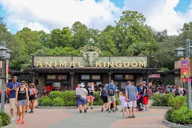 Animal Kingdom October