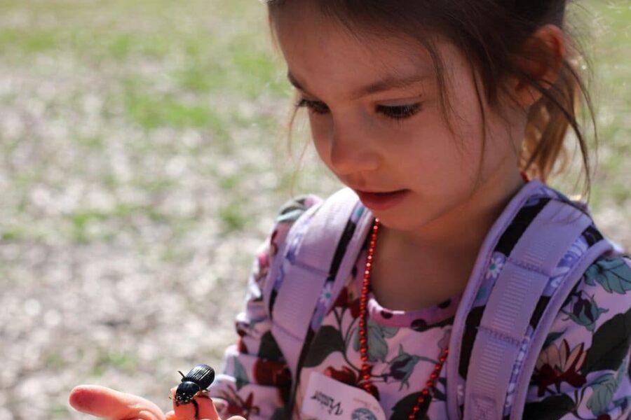 homeschool curriculum preschool kindergarten- a healthy slice of life