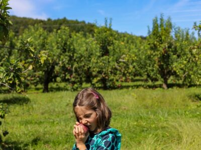 Stepp's Hillcrest Orchard NC (12 of 23)